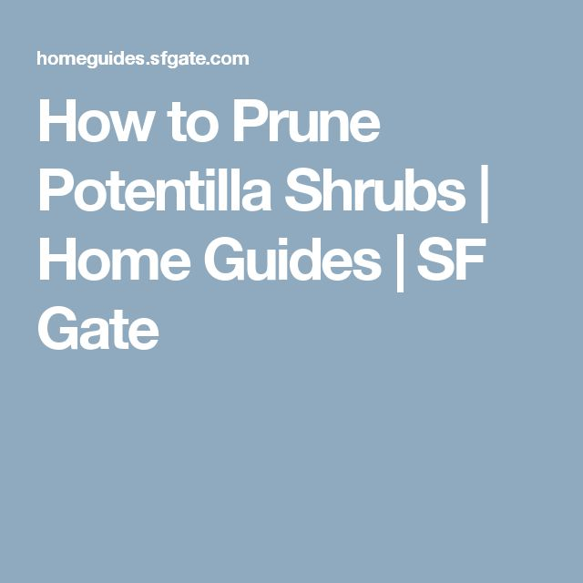How to Prune Potentilla Shrubs | Home Guides | SF Gate