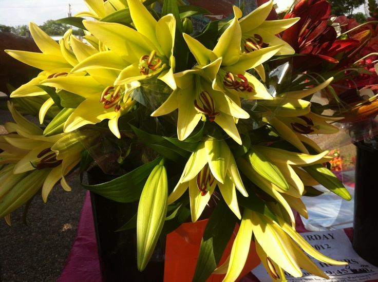 Lilies at the market - http://artemisinthecity.com