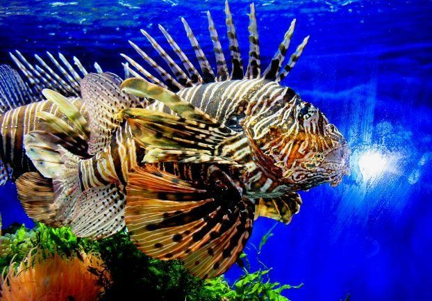 Rare fish species