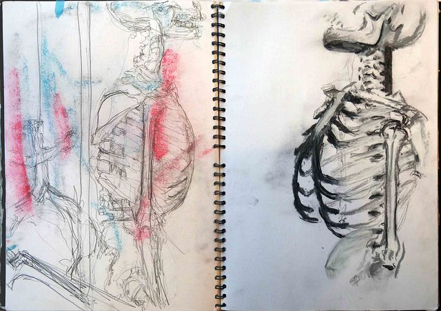 skeleton observational drawings. One in pencil with accidental (but georgous) chalk smudges, the other in chalks. ©Robin Bonar-Law