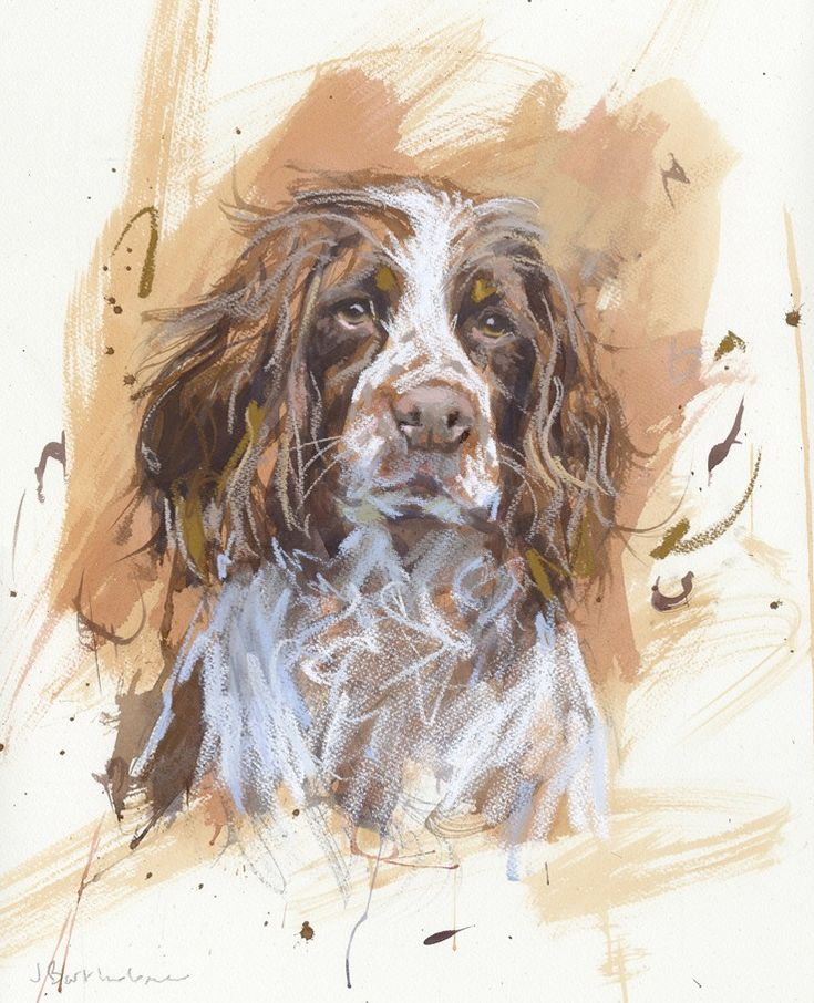Springer Spaniel Oil Paintings