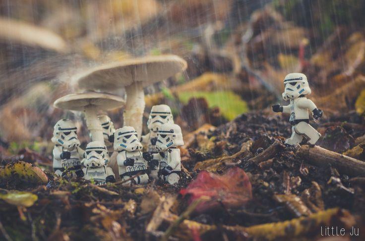 Stormy Autumn Rain