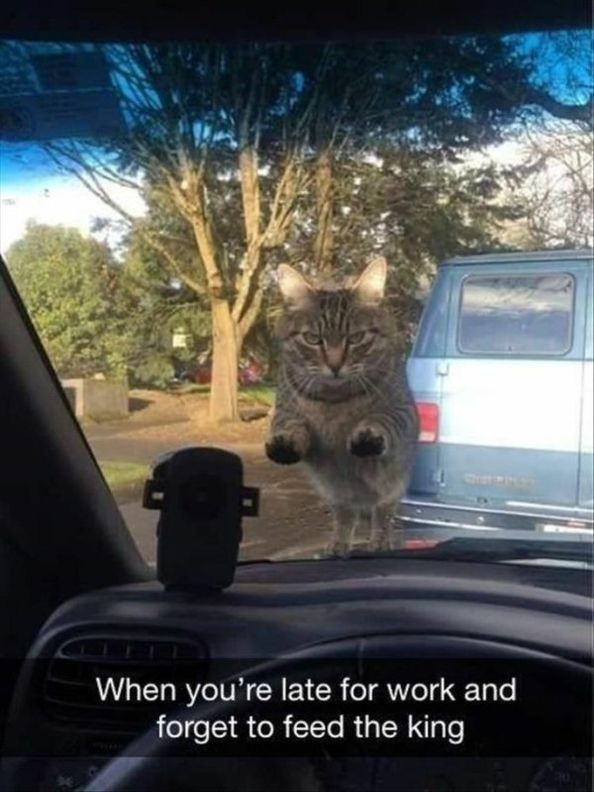 60 Funny and Cute Animals Photos