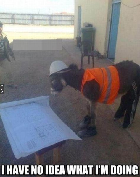 When you start a new job... #humor #animals | See more about humor animals, donkeys and construction.