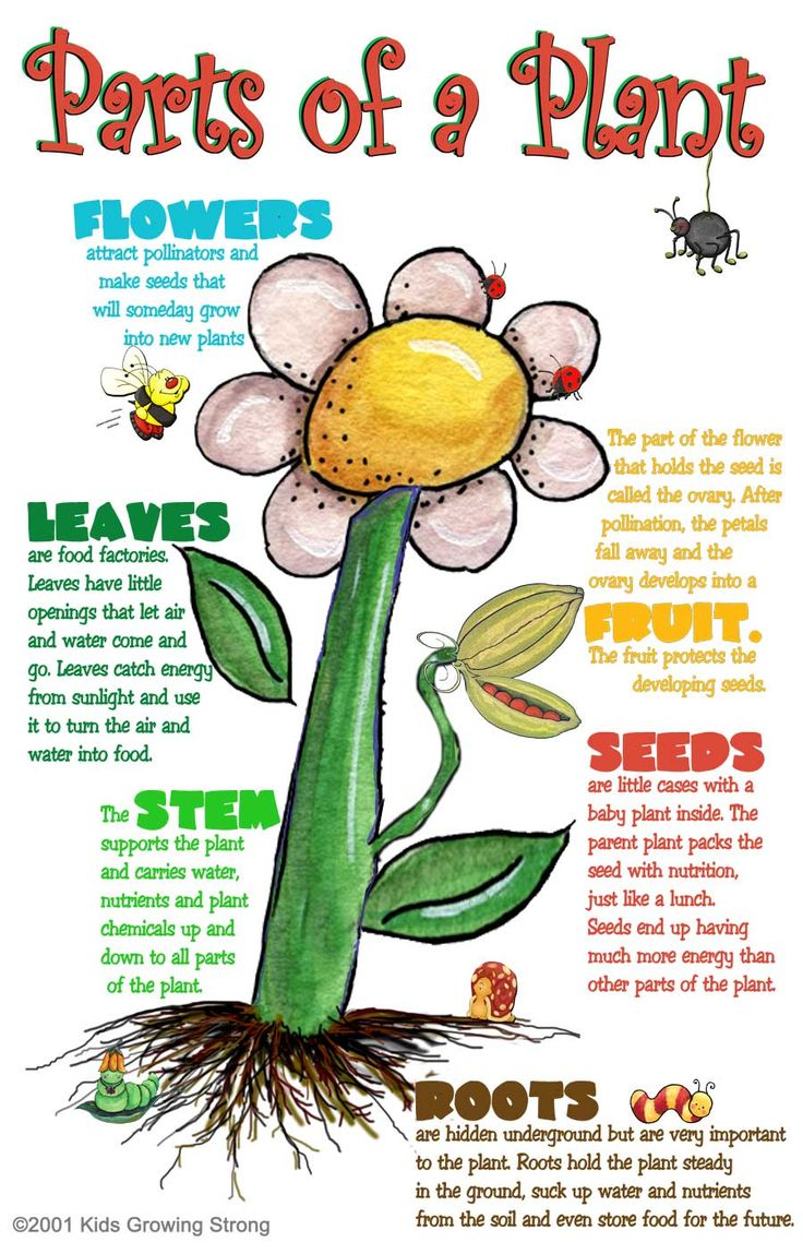 Parts of a Plant – Kids Growing Strong