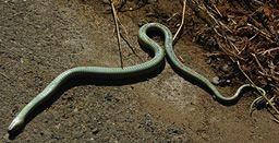 Tanatose é um comportamento de defesa de certos animais, que simulam a própria morte para enganar predadores. Entre os praticantes estão alguns mamíferos (como os gambás), répteis (lagartos e cobras), anfíbios (sapos e pererecas) e até peixes. http://planetasustentavel.abril.com.br/planetinha/natureza/tanatose-740267.shtml