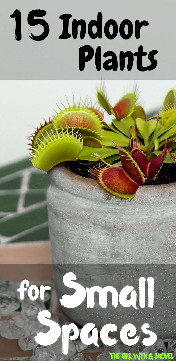 Best 25 small indoor plants ideas on pinterest plants for Low light non toxic house plants