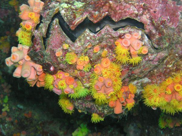 Blooming Reef