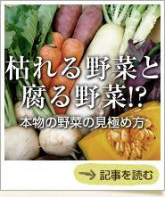 枯れる野菜と腐る野菜!?