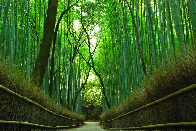 Bambukovyy-koridor-u-podnozhya-gory-v-Kioto.jpg (630×422)