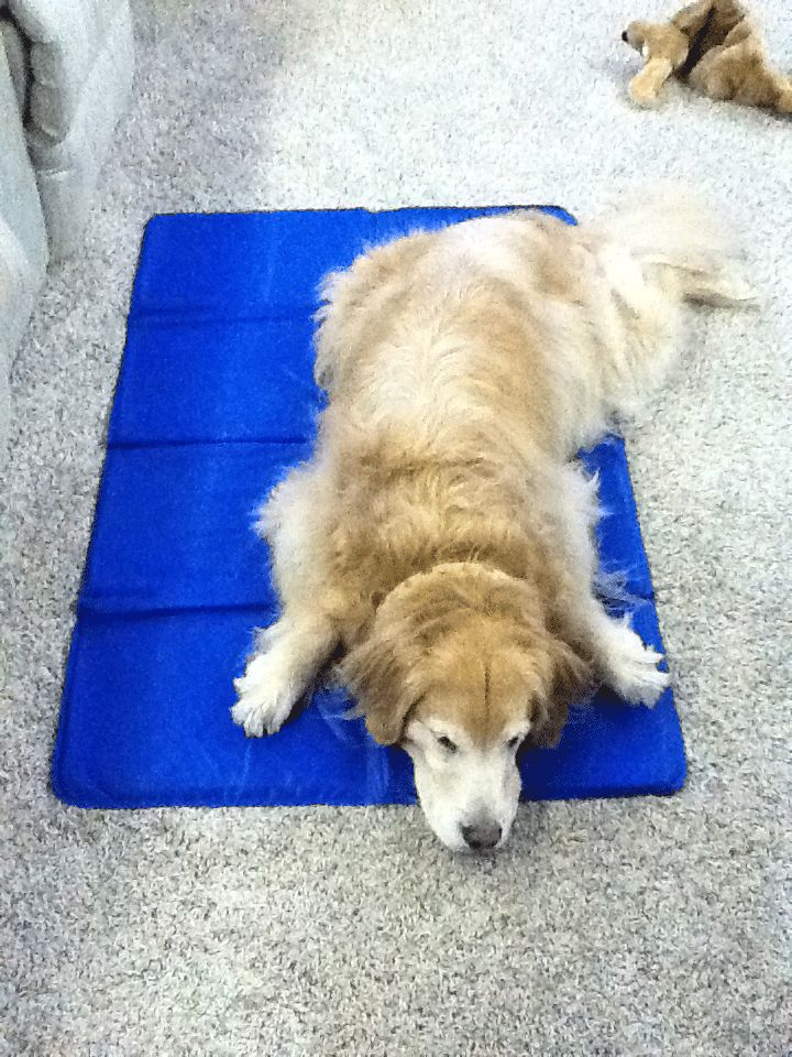 dog cooling pad dog cooling mat. Black Bedroom Furniture Sets. Home Design Ideas