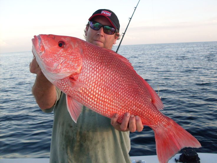 17 best images about salt water fishing fish on on for Florida fishing seasons