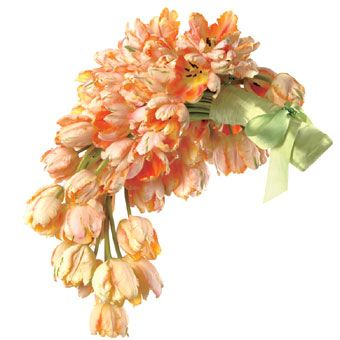 Classic Wedding Bouquet Ideas : Hand-tied cascading bouquet of apricot Parrot tulips