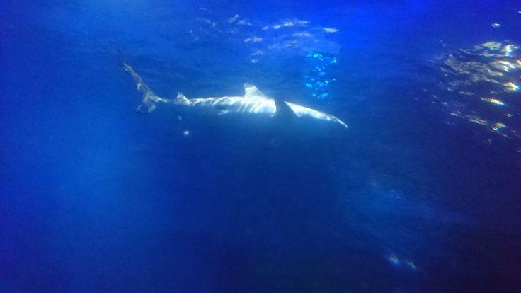 Jaws, National Sea Life Centre, Birmingham