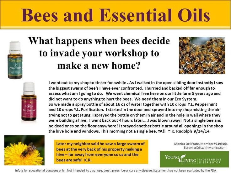 how to get rid of bees without killing them