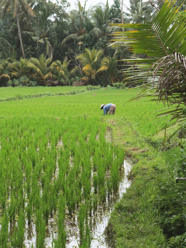 Organiser Une Retraite de Yoga à Bali à Petit Budget #Indonesia #Bali #Ubud #Travels