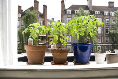 How to Grow Healthy, Delicious Vegetables in Small Spaces: Container vegetable gardening allows you to grow vegetables almost anywhere.