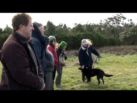 Otways Conservation Dogs