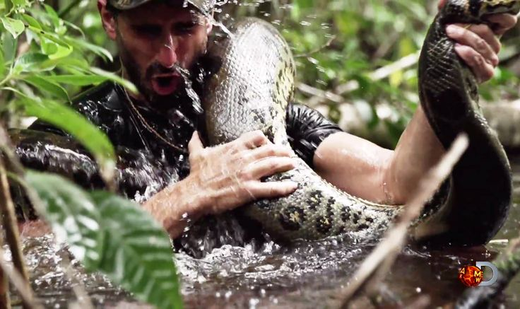 "PETA spoke out against the Discovery Channel's upcoming Eaten Alive special, which will show wildlife specialist Paul Rosolie being swallowed whole by an anaconda.The statement continued: ""Whatever the filmmaker has planned, the snake will likely pay the ultimate price, as animals usually do when they're used for entertainment. PETA has reached out to the Discovery Channel and asked them to pull the show, whether it is a hoax or not"