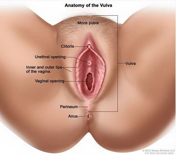 Where To Put Your Penis In The Vagina 56