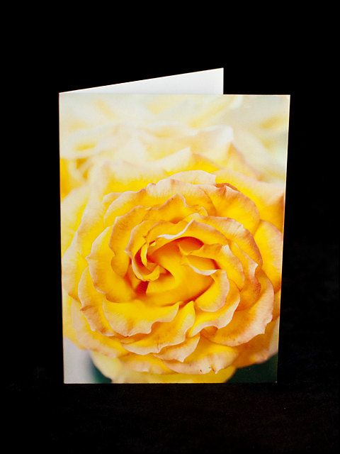 Greeting Card  lemon yellow rose  blank inside by ErinnaImagery, $4.50