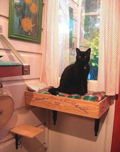 estante ventana gato