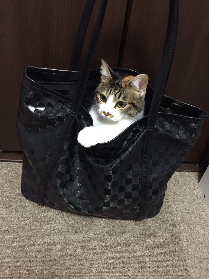 #Cats  #Cat  #Kittens  #Kitten  #Kitty  #Pets  #Pet  #Meow  #Moe  #CuteCats  #CuteCat #CuteKittens #CuteKitten #MeowMoe      おんなのこです。つくしです。(匿名希望)さんより  #CuteCats...   http://www.meowmoe.com/43912/