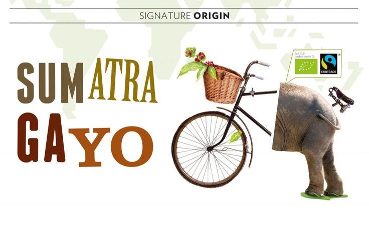 SUMATRA GAYO - 250G KAFFEBÖNOR | Kaffeladan