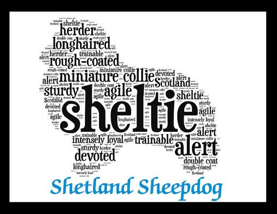 """Click visit site and Check out Best """"SHELTIE"""" T-shirts. This website is superb. Tip: You can search """"your name"""" or """"your favorite shirts"""" at search bar on the top."""