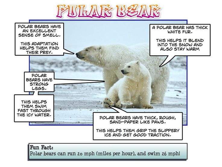 Dylan's Polar Bear 2