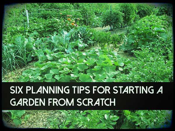 Best 25+ Starting A Garden Ideas On Pinterest | Raised Gardens, Planting A  Garden And When To Plant Garden