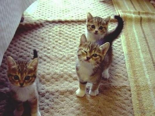 adorable kittens!