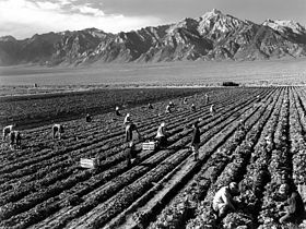 Farm Workers, Mt. Williamson in background, Manzanar Relocation Center, California, 1943, Ansel Adams, public domain via Wikimedia Commons.