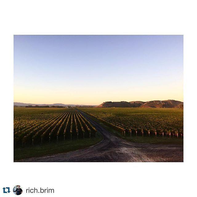 #Repost @rich.brim with @repostapp. ・・・ Good morning Craggy Range winery. Hawkes bay. #craggyrangewinery  #craggyrange  #Leica