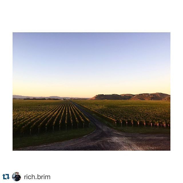#Repost @rich.brim with @repostapp. ・・・ Good morning Craggy Range winery. Hawkes bay. #craggyrangewinery  #craggyrange  #Leica