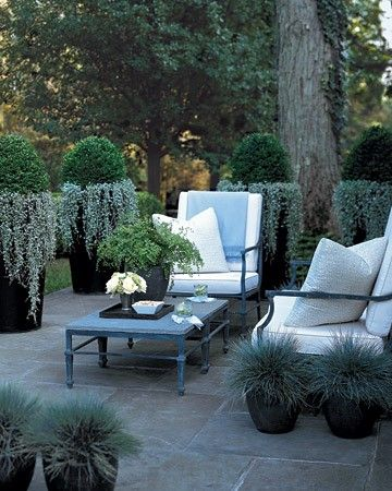 A narrow palette highlights the dusky bluestone of this modern patio. Metal furniture with clean lines contributes to its architectural elegance. Sculptural plantings in corresponding marine tones create a sense of enclosure. Large zinc urns corral rounded boxwoods underplanted with trailing 'Silver Falls' dichondra. Dark pots hold spiky ornamental grasses.