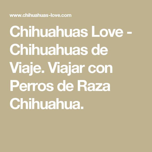 Chihuahuas Love - Chihuahuas de Viaje. Viajar con Perros de Raza Chihuahua.