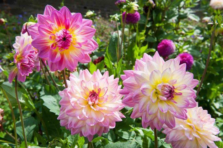 Crea il tuo giardino fiorito con i bulbi estivi il mio for Crea il tuo giardino