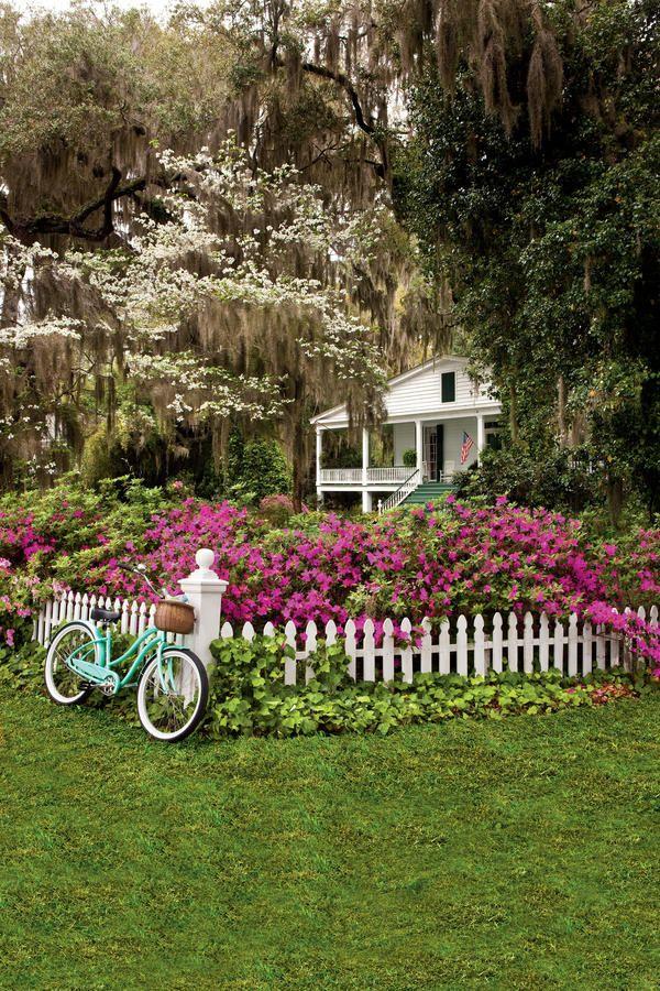 Easy-Growing Flowers for Fences: Rose-purple Azaleas