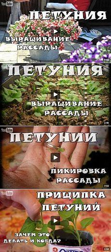Подборка видео о выращивании петунии