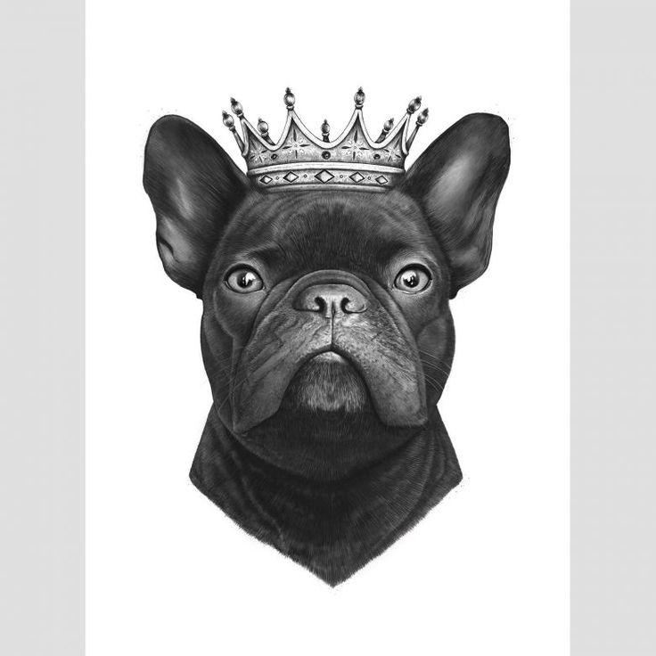 fototapete korenkova  king french bulldog  wallartde
