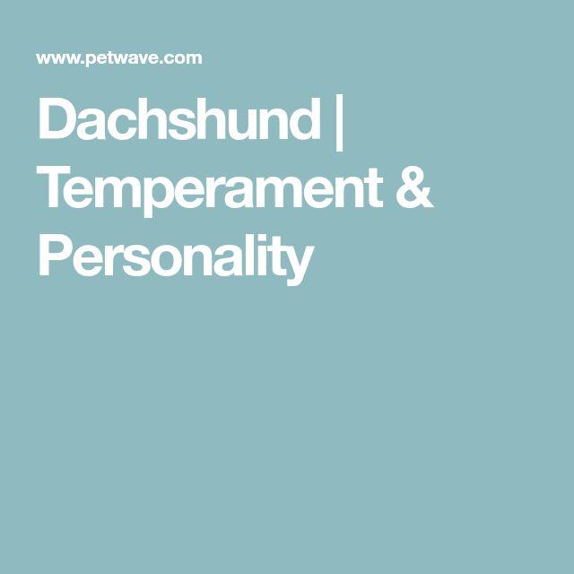 Dachshund | Temperament & Personality