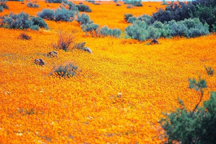 """Namaqualand, South Africa. My home country is so beautiful. So much of it is incredible. """"Throughout the majority of the year Namaqualand looks like most of the region—arid and dry—but in spring it effloresces into something completely mesmerizing. Hundreds of thousands of daisies bloom, transforming the dry, empty land"""""""