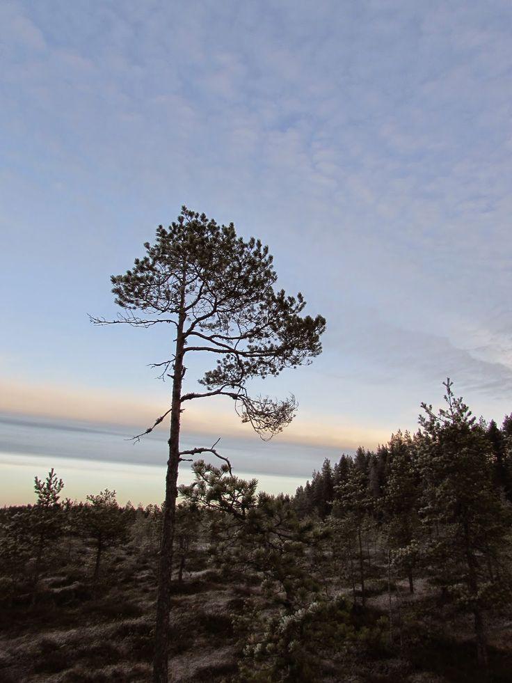 Soljanen, Seitseminen National Park.