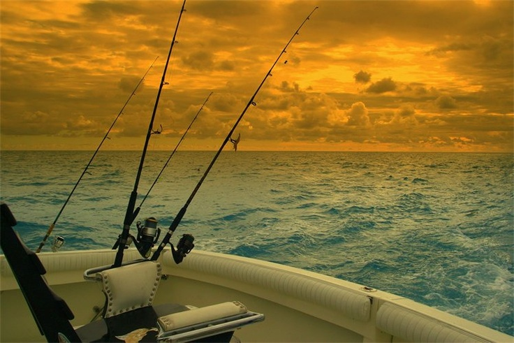 99 best florida fishing images on pinterest fishing for Swoop deep sea fishing