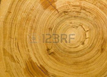 Este tipo de madera se llama CIPRÉS y la utilizamos para construir pequeños objetos de decoración