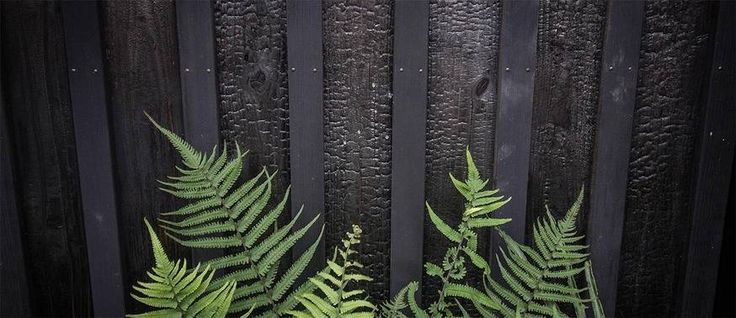 CONSTRUCTION - Cette technique traditionnelle qui rend les maisons résistantes aux insectes et à l'humidité sans produits chimiques, revient à la mode dans l'archipel.