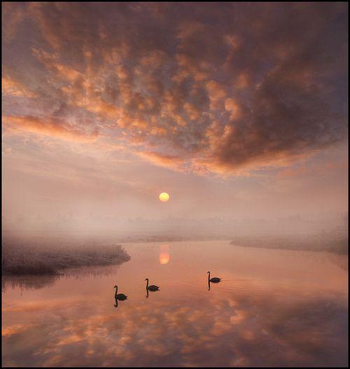 : Amazing Moments, Swan Lakes, Bi Adrian Art, Beautiful Mornings, Amazing Photo, Adriansart, Cloud, Sunri Sunsets, Natural