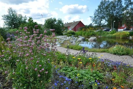 Svanhovd Botanical Garden is one of only three public botanical gardens located north of the Arctic Circle. The garden has a variety of perennials from northern and alpine areas as well as summer flowers. The garden at Svanhovd presents the flora, the diversity of plants and trees thriving in the Pasvik Valley's continental subarctic climate.