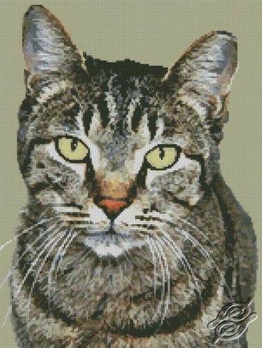 Cat - Free Cross Stitch Pattern